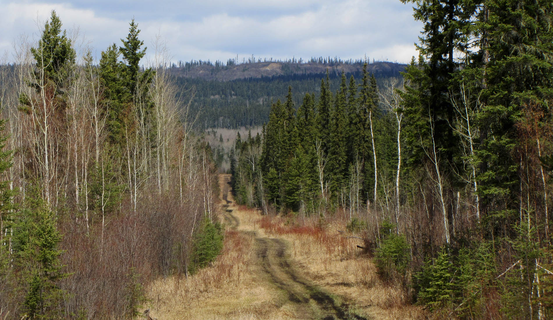 Alberta Canada Hunting Outfitters