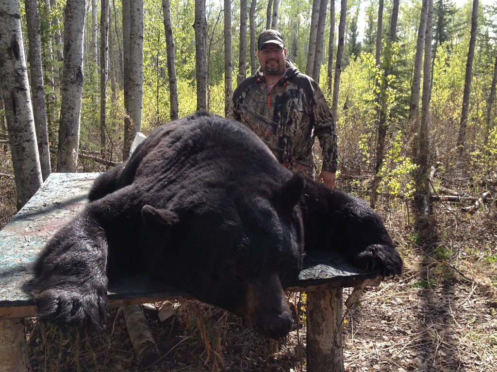 Black Bear Hunting Boss Outfitting