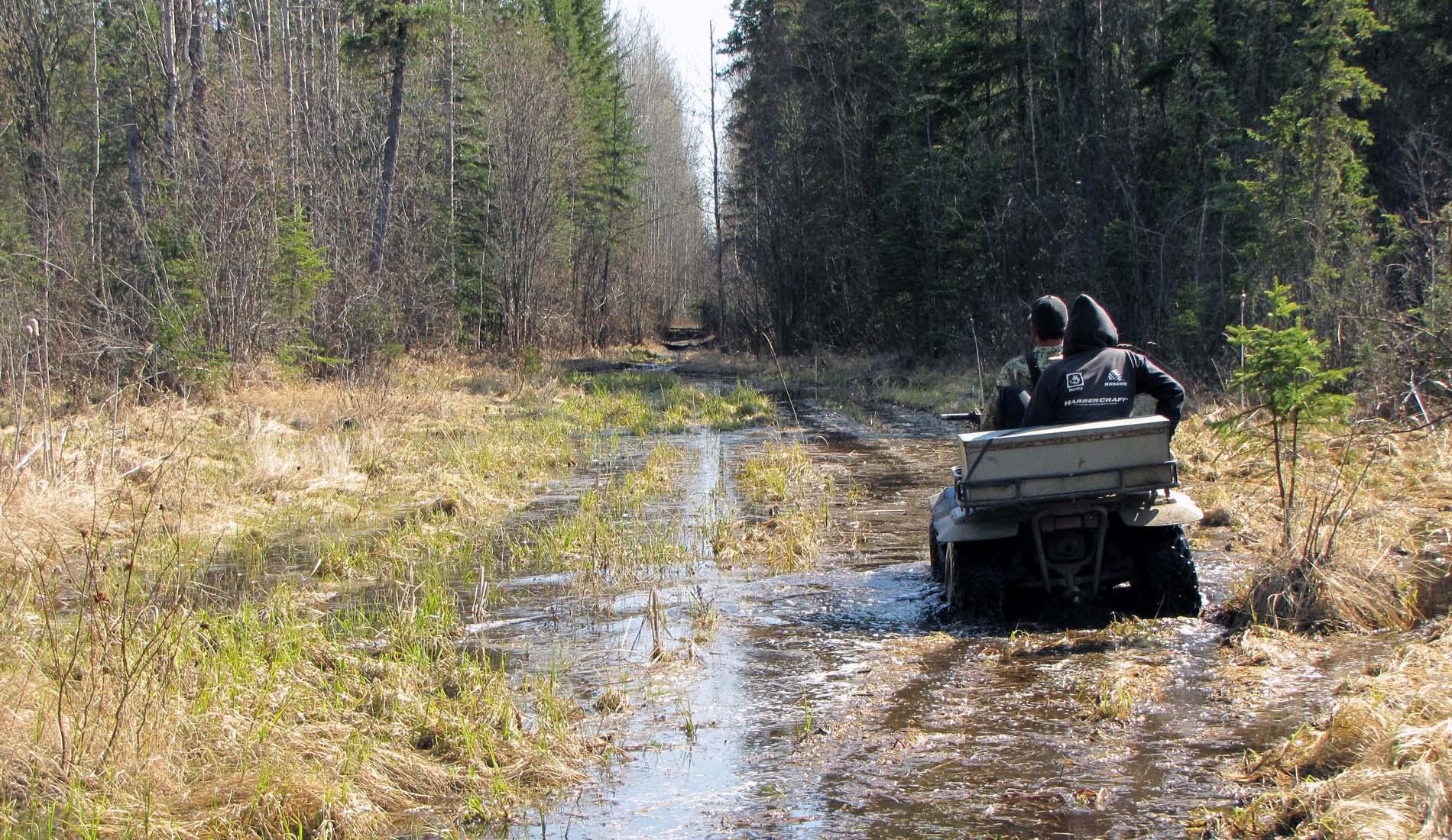 bear hunting alberta