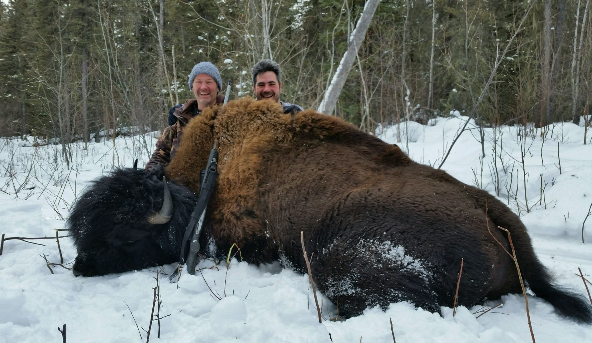 canada bison hunting