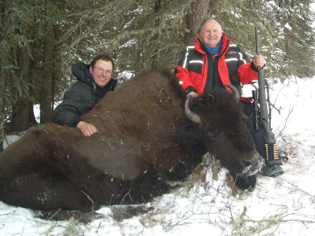 alberta bison hunts