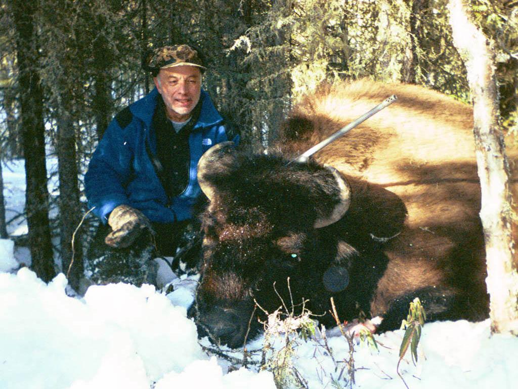 alberta canada bison hunts