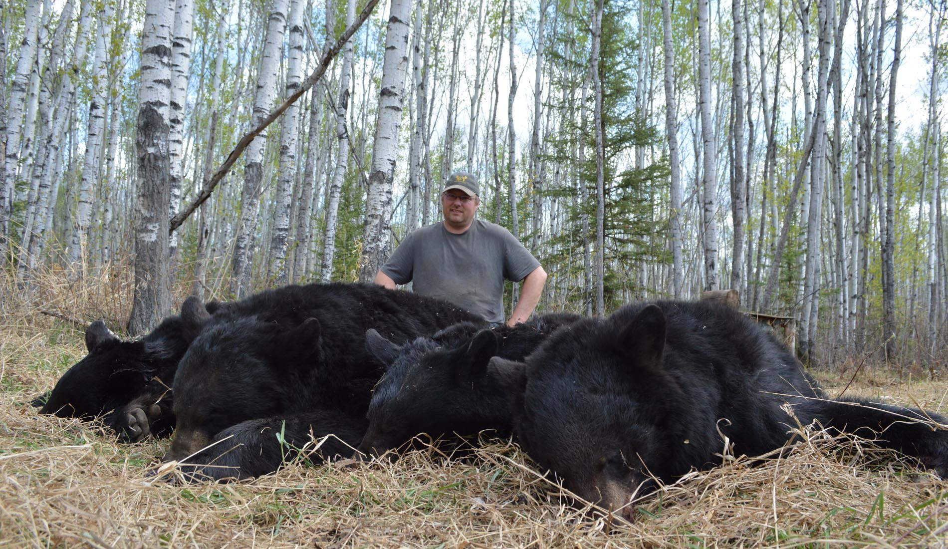 Alberta Black Bear Hunting Outfitters