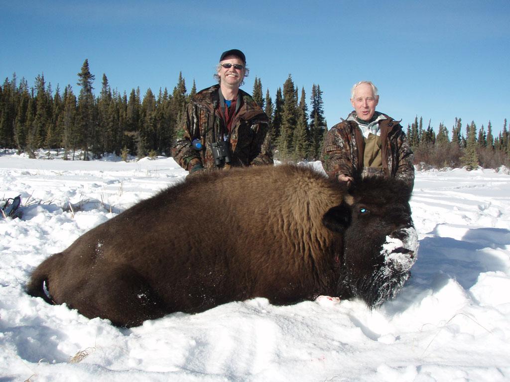 Bison Hunting Alberta Canada