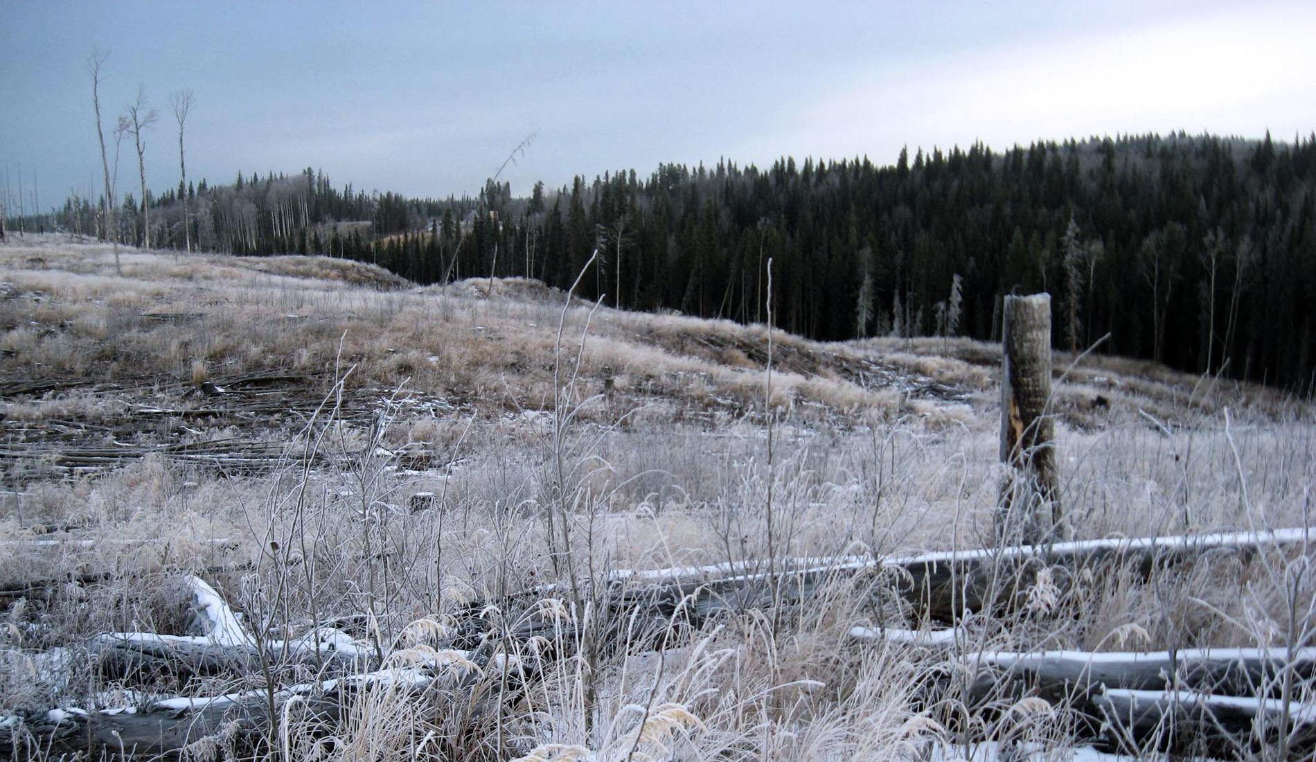 whitetail deer hunts in Alberta